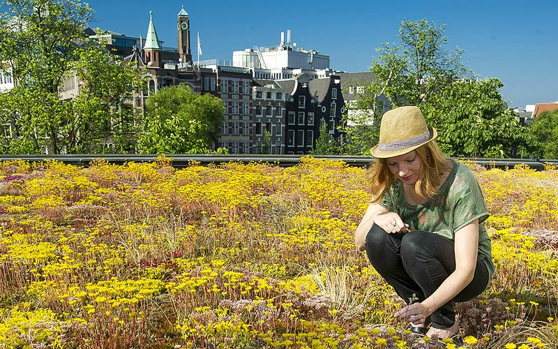 Eyecatcher dakveiligheid groen daken