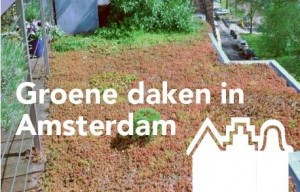 Groene-Daken-in-Amsterdam eyecatcher veiligheid